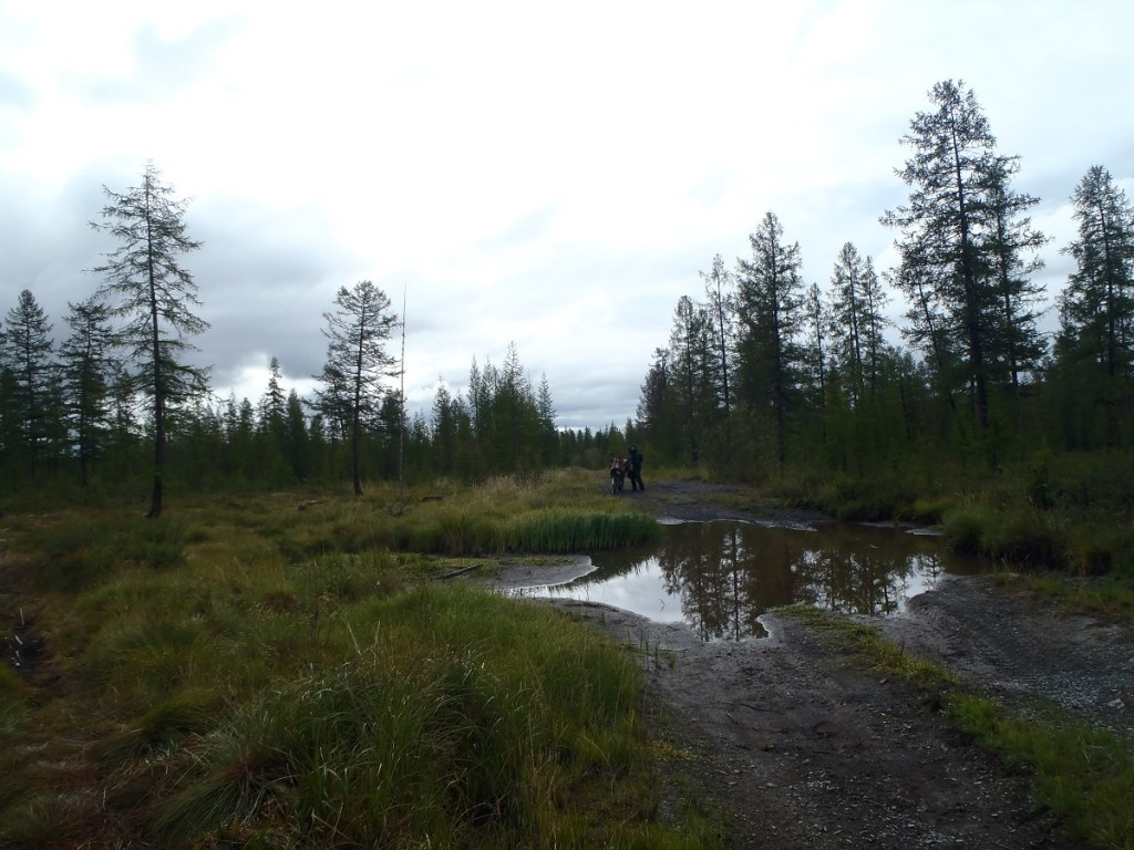 Old summer road bog